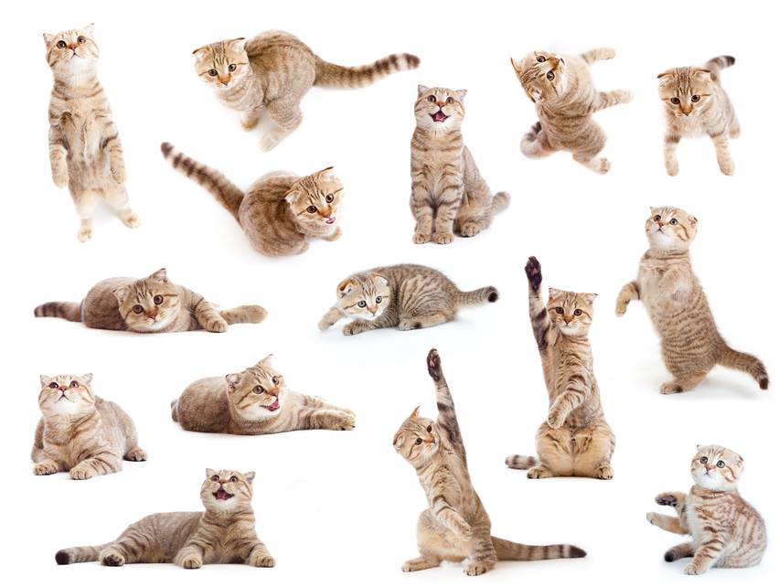 תערוכת החתולים